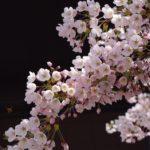 「和を以て貴しとなす」日本文明の挑戦~宗教・科学・哲学から美学の時代へ~